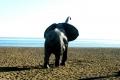 Slon na pláži?