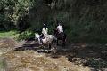Výlety na koních