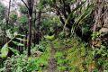 Příroda na Floresu