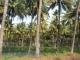 Plantáže v Tamil Nádu
