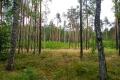 Krásné  lesy