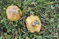 Všude houby