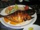 Butterfish neboli vynikající máslová ryba