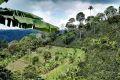 Kávová farma